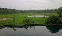 Индия во время дождя