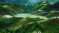 Рисовые террасы в Кордильерах Филиппин