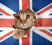 Великобритания, которая продолжает удивлять: как к ней привыкнуть, переехав из России
