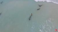 Видео: Сотни дельфинов выбросились на берег в Западной Африке