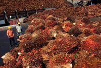 ВОЗ передумала: пальмовое масло признали опасным для здоровья продуктом