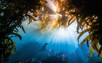 15 неотразимых снимков, победивших в конкурсе фотографии Nature Conservancy