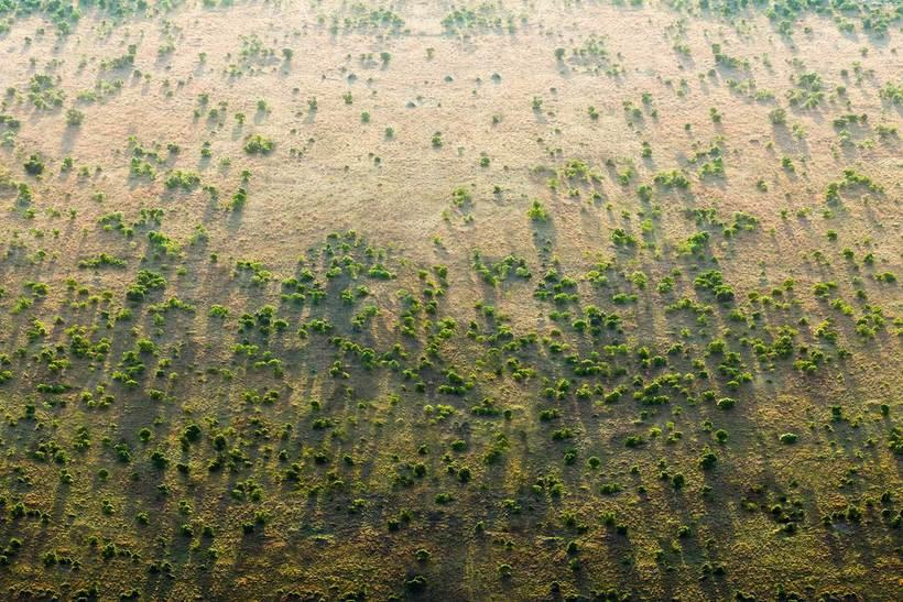 20 стран начали строить «Великую зеленую стену», чтобы прекратить изменение климата