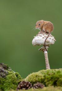 Восхитительные снимки крошечных мышек, резвящихся в дикой природе